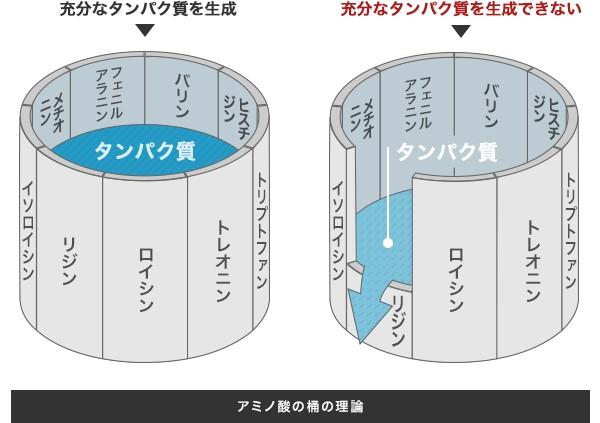 アミノ酸スコアの桶の理論