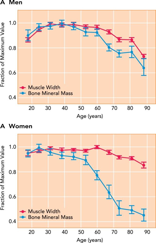 年齢と筋肉量低下の関係