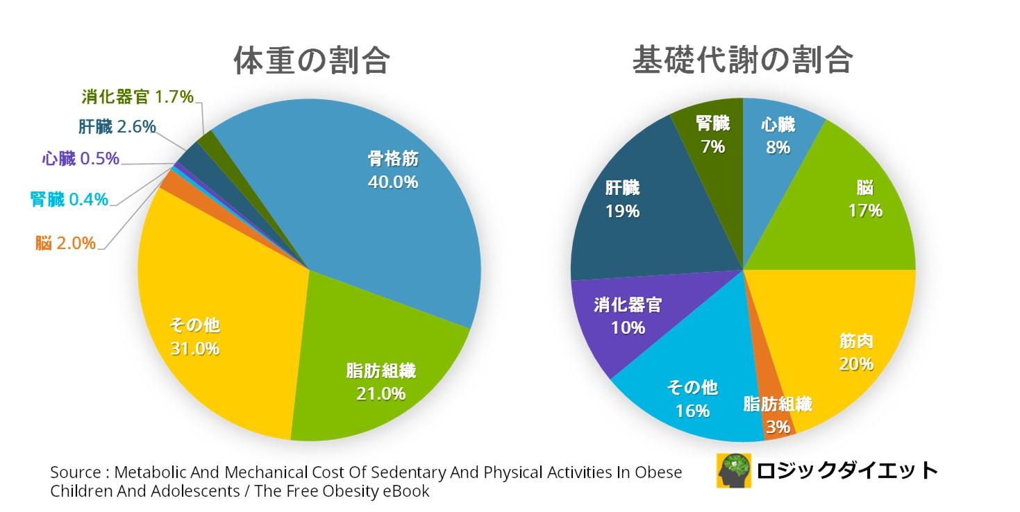 基礎代謝の割合